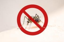 Virus de la dengue : une première contamination par voie sexuelle en Espagne