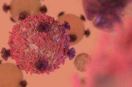 Découverte d'une cellule T