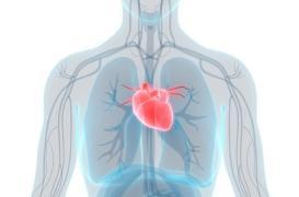 Le niveau d'études influerait sur le risque de maladies cardiovasculaires