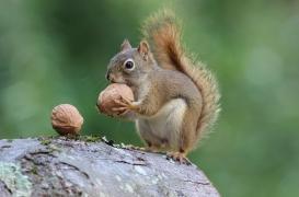 Creutzfeldt-Jakob : un homme décède d'une forme rare de maladie après l'ingestion de cerveaux d'écureuils