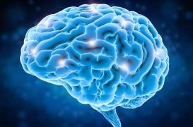 Evolution : le cerveau de l'homme aurait évolué pour faire face aux défis environnementaux