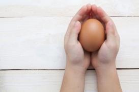 Royaume-Uni : des chercheurs font évoluer un embryon humain dans un oeuf d'oiseau