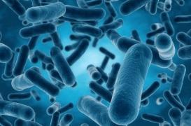 Une bactérie mangeuse de chair se répand en Australie