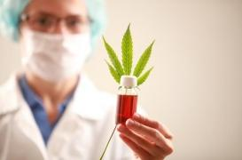 Cannabis médical : quels sont ses bienfaits sur la santé ?