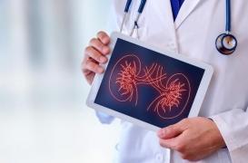 Cancer du rein, la stratégie gagnante : à Angers, deux médecins inventent un traitement révolutionnaire