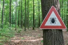Maladie de Lyme : les femmes blanches et aisées plus à risque