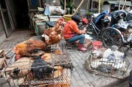 Chine : la progression inquiétante de grippe aviaire