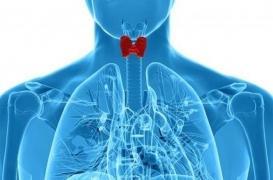 Levothyroxine : 10% des malades traités ne sont généralement pas améliorés