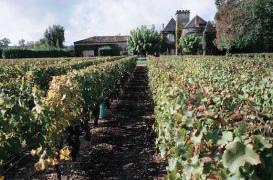 Pesticides : les politiques en retrait