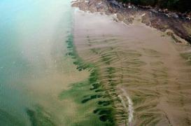 Mort d'un joggeur : la piste des algues vertes relancée