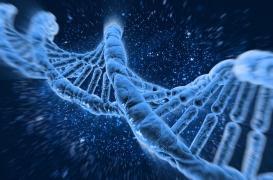 Cancer du sein: les risques génétiques revus à la hausse