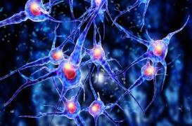 Glioblastome : les promesses d'une immunothérapie d'origine virale