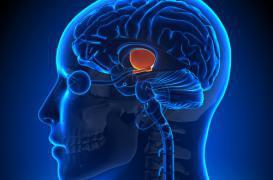 Des neurones sexuels retrouvés dans tout le cerveau
