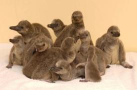 Même les pingouins sont dépressifs l'hiver