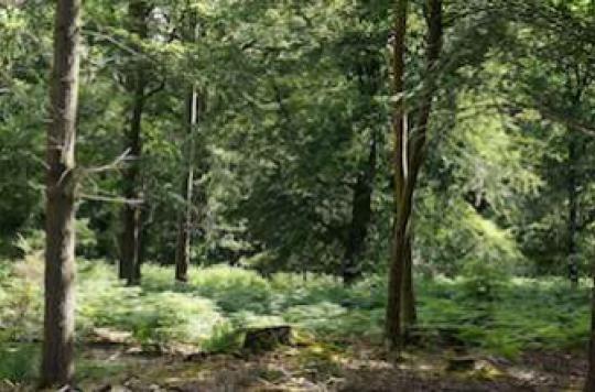 Les forêts aident à réduire les problèmes respiratoires