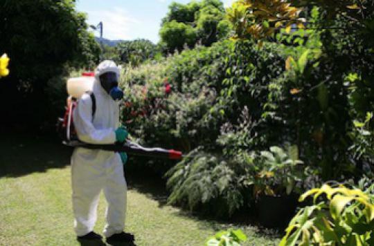 Dengue : d'autres cas autochtones attendus en Métropole