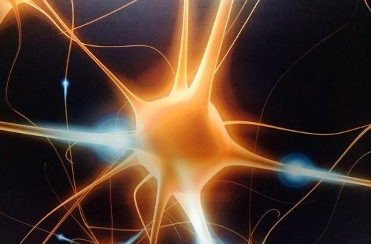 Oublier pour produire des neurones