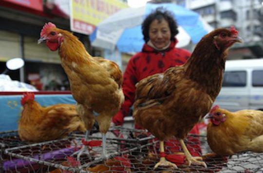 Le virus H7N9 se propage en Chine