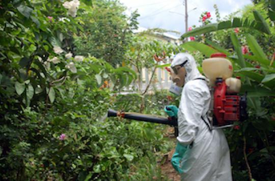 Chikungunya : l'épidémie s'intensifie en Martinique