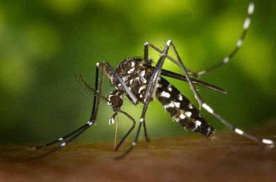 Dengue : la Réunion au bord de l'épidémie