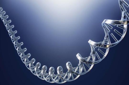 ADN humain de 400 000 ans : une découverte \