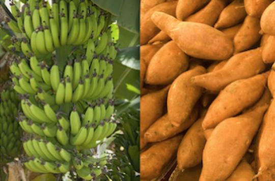 Les aliments riches en potassium protègent de l'AVC
