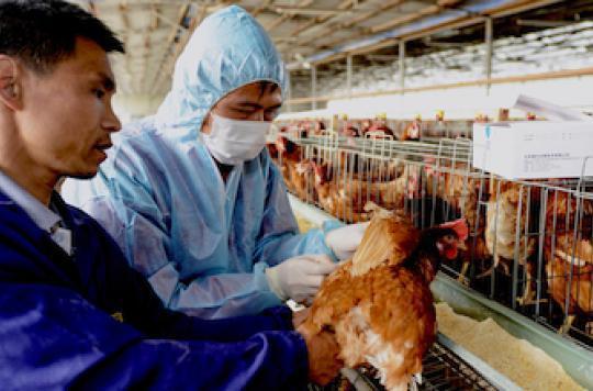 Grippe H7N9 : La première transmission interhumaine est confirmée