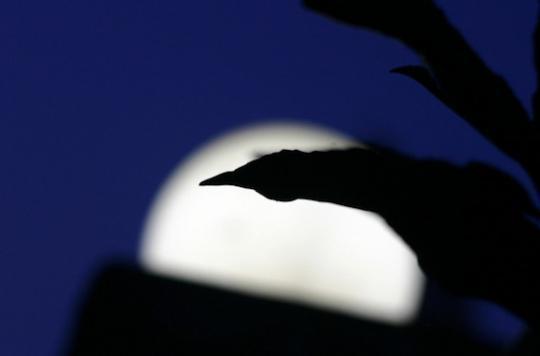 Pleine lune : pas d'influence sur le sommeil des enfants