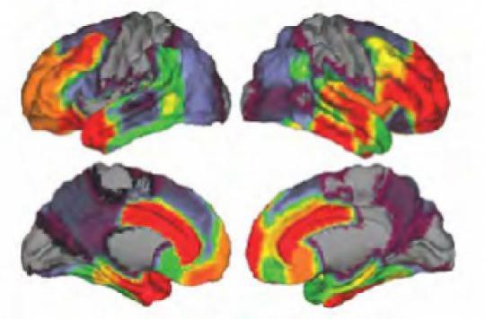 Pour apprendre, le cerveau doit se relâcher