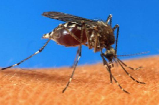 Moustique tigre : 18 départements en alerte rouge