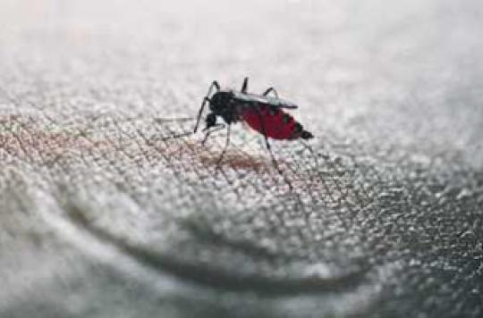 Chikungunya : quatre cas autochtones à Montpellier