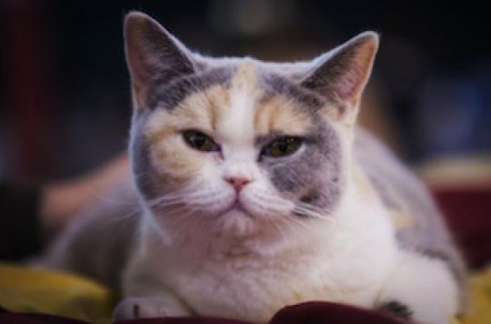 Tuberculose : 2 premiers cas de contamination par des chats