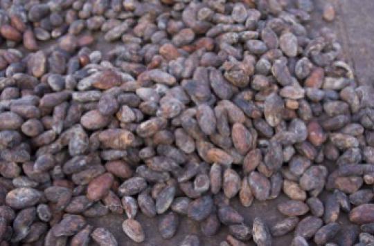 Alzheimer : l'effet protecteur du cacao
