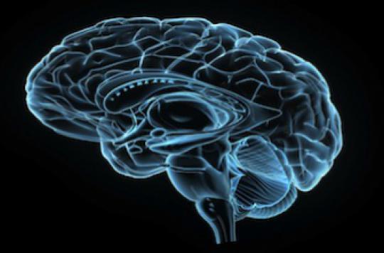 Mémoire : des chercheurs ont réussi à effacer et réactiver des souvenirs