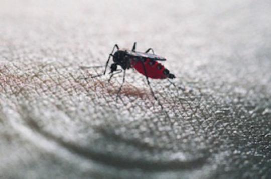 Le moustique tigre sous haute surveillance en métropole