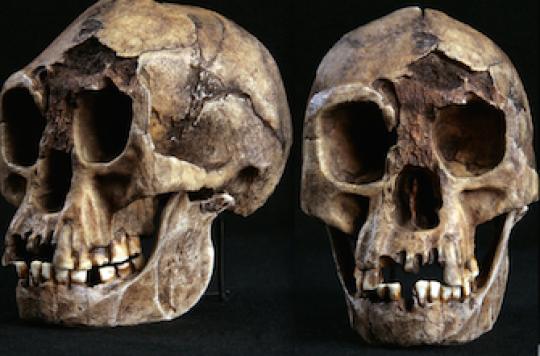 L'homme de Florès n'était pas une nouvelle espèce mais trisomique