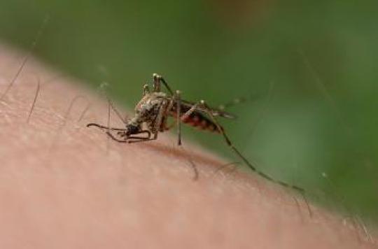Paludisme : un vaccin prévu pour 2014