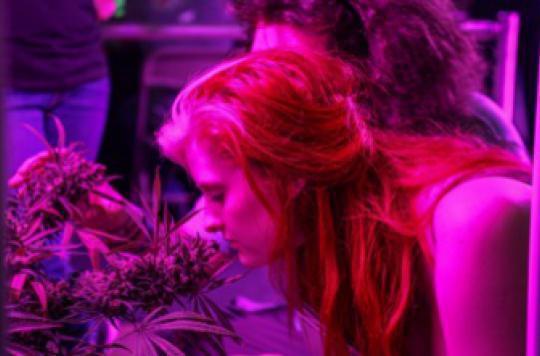 Légalisation du cannabis : les lois sur le tabac et l'alcool servent d'exemple