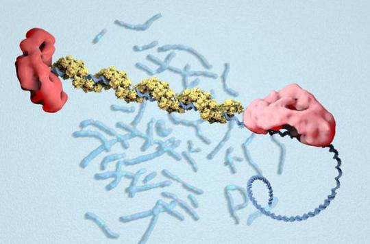 Cancer du sein : des chercheurs ont décodé le gène BRCA2