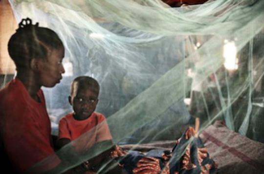 Palu, dengue... : les maladies vectorielles font 1 million de morts par an