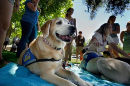 Des chiens détectent un cancer de la prostate dans 98 % des cas