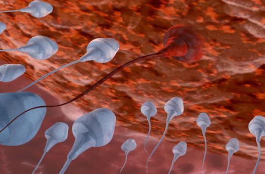 Un gène clé identifié dans la fertilité masculine