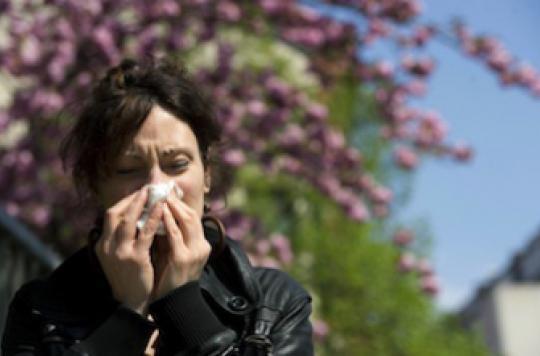 Alerte aux pollens de bouleau dans l'Est de la France