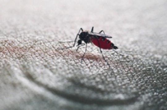 de nouveaux r pulsifs anti moustiques pour combattre les pid mies. Black Bedroom Furniture Sets. Home Design Ideas