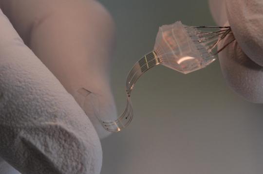 Un implant a permis à des rats paraplégiques de remarcher