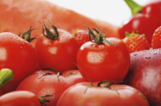 Cancer de la prostate : les tomates réduiraient le risque de 20 %