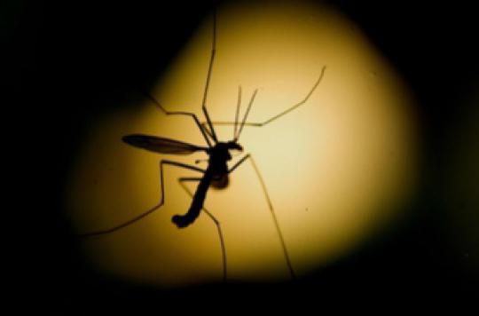 Dengue: des résultats encourageants pour un vaccin