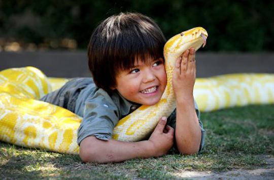 Tortues et serpents : les autorités alertent sur les dangers pour les enfants