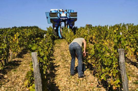 Pesticides : les Français trois fois plus exposés que les Américains