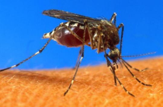 Chikungunya : la Polynésie française frappée par l'épidémie